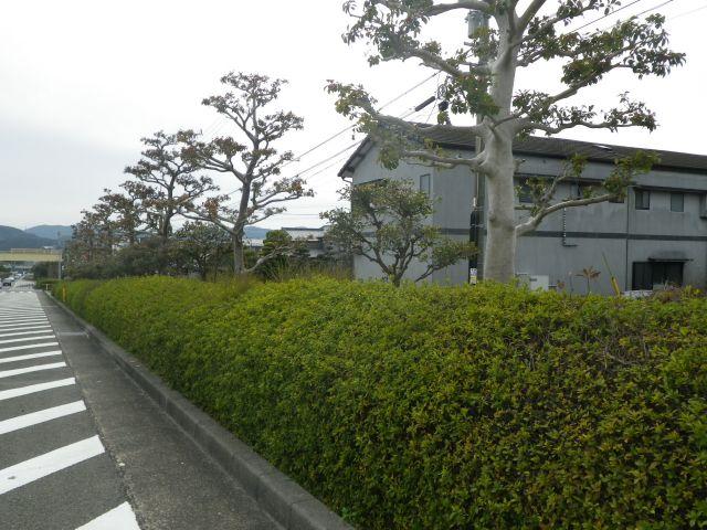 街路樹維持管理工事
